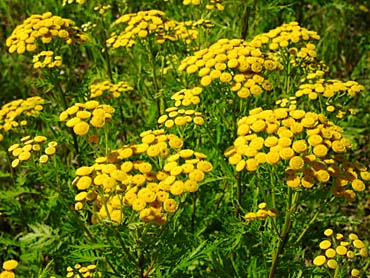 La utilidad de las plantas medicinales